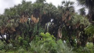 Baturiya Bird Sanctuary