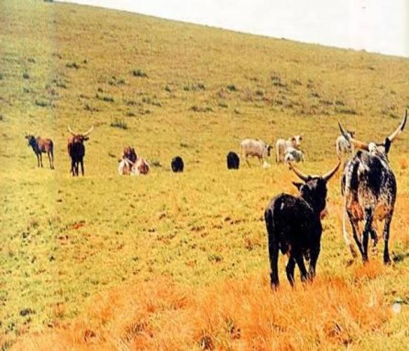 Chad Basin National Park
